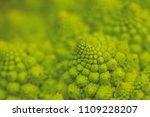 romanesque cauliflower... | Shutterstock . vector #1109228207