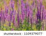 summer flowerbed of beautiful... | Shutterstock . vector #1109379077