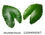 isolated tropical green leaves... | Shutterstock . vector #1109494547