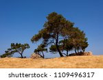 Green Tree Conifer On Top Of A...