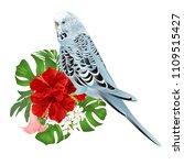 budgerigar  home pet  blue pet...   Shutterstock .eps vector #1109515427