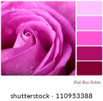 Pink rose colour palette with complimentary swatches. - stock photo