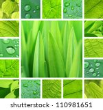 Collage from photos of green plant and leaves with rain droplets - stock photo