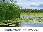 Cane And White Lilies On The...