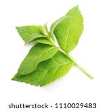 green mint leaves isolated on a ... | Shutterstock . vector #1110029483