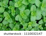 top views of fresh mint leaves... | Shutterstock . vector #1110032147