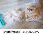a red cat and combed hair of a... | Shutterstock . vector #1110032897