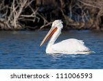 dalmatian pelican in winter ... | Shutterstock . vector #111006593