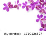 Set Of Pink Orchid Isolated...