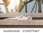 a cat is yawning on cement... | Shutterstock . vector #1110274367