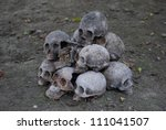 pile of skull on the ground. - stock photo