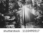 trees illuminated by sunbeams... | Shutterstock . vector #1110490517