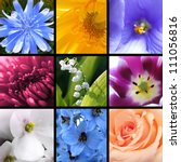 Collage of bright beautiful flowers - stock photo