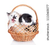 Two Kitten In Basket Isolated...