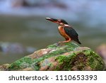 beautiful bird  female of blue...   Shutterstock . vector #1110653393