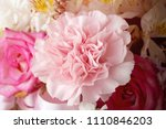 close up carnation flower in... | Shutterstock . vector #1110846203