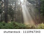 sunbeams in the forest | Shutterstock . vector #1110967343