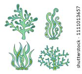 set of vector seaweed and coral.... | Shutterstock .eps vector #1111013657