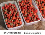 strawberry. strawberries in... | Shutterstock . vector #1111061393