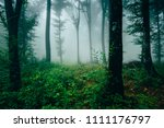 natural woods with green plants ... | Shutterstock . vector #1111176797