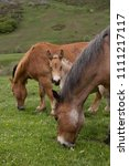 Small photo of Wild foal and horses