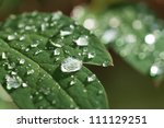 Raindrops on a leaf - stock photo