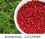 Red cranberries in a bucket - stock photo
