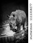 rhinoceros portait with a... | Shutterstock . vector #1111318277