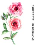 beautiful roses flowers ... | Shutterstock . vector #111133853
