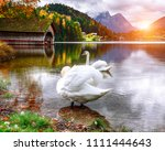two white swans in crystal... | Shutterstock . vector #1111444643