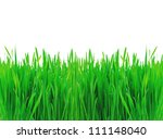 Green spring grass isolated on white background - stock photo