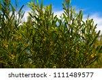 soft  beautiful  fluffy ...   Shutterstock . vector #1111489577