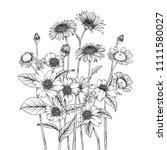 sketch floral botany collection.... | Shutterstock .eps vector #1111580027