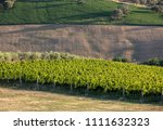 panoramic view of olive groves  ... | Shutterstock . vector #1111632323