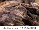 close up detail of dried red... | Shutterstock . vector #1111665083