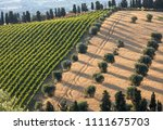 panoramic view of olive groves  ... | Shutterstock . vector #1111675703