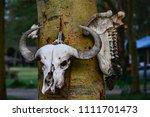 Scary Skull Of Animal In Kenya