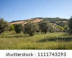 view of olive groves  on... | Shutterstock . vector #1111743293