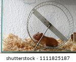 Stock photo hamster wheel pet animal 1111825187