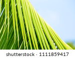 calm soothing palm branch | Shutterstock . vector #1111859417