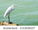 great egret at lake balaton ... | Shutterstock . vector #1112028227