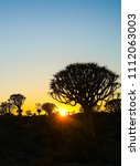 Small photo of Golden hues as sun rises over rugged terrain of quiver tree forest, Namibia
