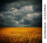 Dark stormy clouds over wheat field. Square panorama from two photos - stock photo