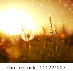 real field and dandelion at... | Shutterstock . vector #111222557