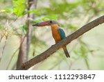 stork billed kingfisher ... | Shutterstock . vector #1112293847