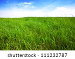 Tall Green Grass  Background...