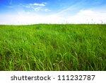 Tall Green Grass  Background...