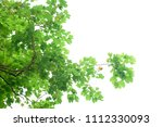 green leaves isolated on white | Shutterstock . vector #1112330093