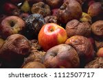 Small photo of One fresh apple among dozens of rotten ones. Opposition, confrontation concept