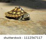 a juvenile yellow blotched map... | Shutterstock . vector #1112567117